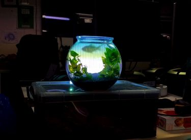 Projection Mapped Goldfish
